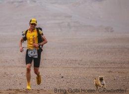 Il court un marathon, une chienne errante termine la course avec lui