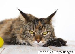 Votre chat est un être diabolique, la preuve en dessins...
