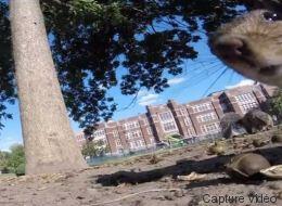 Voilà un petit aperçu de ce qu'est la vie d'un écureuil