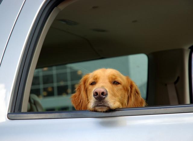 a t on le droit de briser la vitre d 39 une voiture pour sauver un chien. Black Bedroom Furniture Sets. Home Design Ideas
