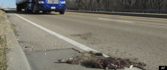 Illinois Roadkill Bill