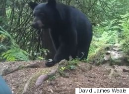 Camper Comes Face-To-Face With Bear Poking At His Tent