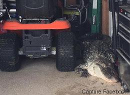 «Chérie, il y a un alligator dans le garage!» (VIDÉO)