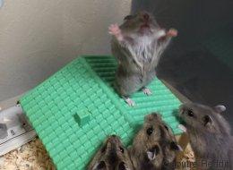 La photo de ce hamster vaut le détour(nement)