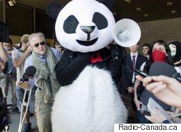 Montréal ne fera pas appel du jugement sur le règlement P-6
