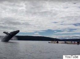 La vidéo de la baleine la plus impressionnante de votre été