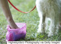 Furieuse, une ainée lance un sac de caca de chien en pleine face d'un de ses voisins