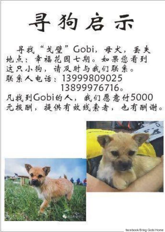bring gobi home