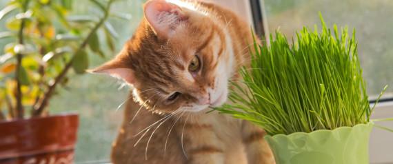 CAT PLANTS