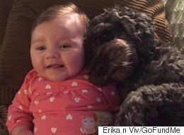 Beloved Family Dog Dies After Saving Baby From House Fire