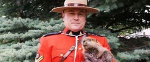 MOUNTIE BEAVER