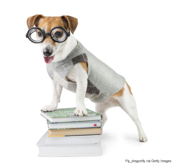 scientist dog
