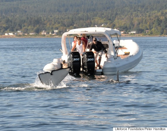 seal killer whale boat