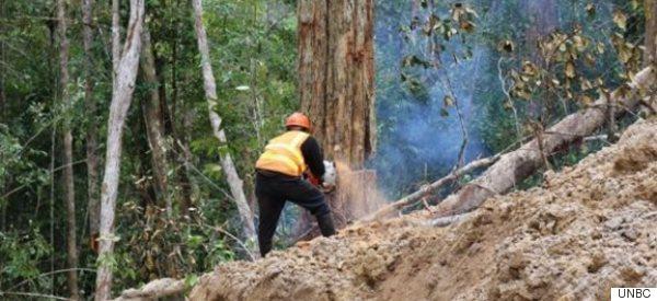 L'empreinte écologique humaine en déclin dans le monde
