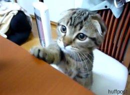 Vous n'allez pas résister longtemps aux supplications de ce chaton (VIDÉO)