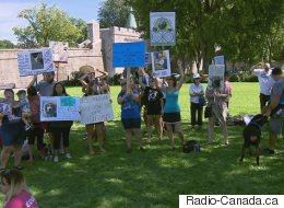 Rassemblement en appui aux pitbulls à Québec (VIDÉO)