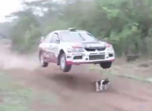 Une voiture de rallye survole... un chien! [vidéo]
