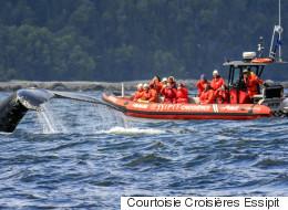 Un zodiac heurte une baleine au large des Bergeronnes