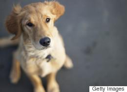 Comme les humains, les chiens distinguent mots et intonations