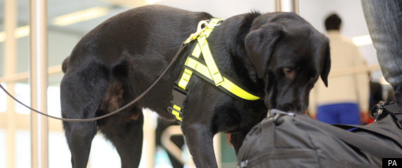 Sniffer Dog Olympic Security