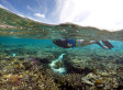 Umweltwunder: Forscher machen Sensationsfund an australischer Küste