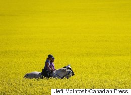 China And Canada's Canola Conundrum Continues