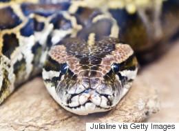 Le python de Verdun fait bien rire les internautes