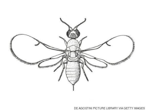 vespa do figo