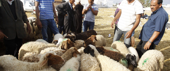 BUYING SHEEP