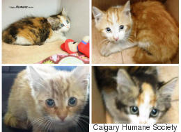 4 Kittens Found Sealed In A Box In Calgary Dumpster