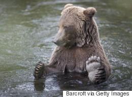 Le karaté sauve un asiatique de 63 ans des griffes d'un ours
