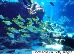 Des océans «malades» du réchauffement, préviennent des scientifiques