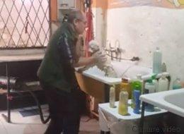 Ce toiletteur s'éclate quand il prend soin des animaux (VIDÉO)