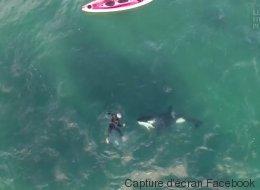 Quand ce kayakiste croise des orques... il nage avec elles (VIDÉO)