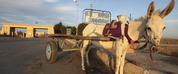 DONKEY EGYPT