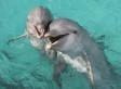 I delfini parlano tra loro