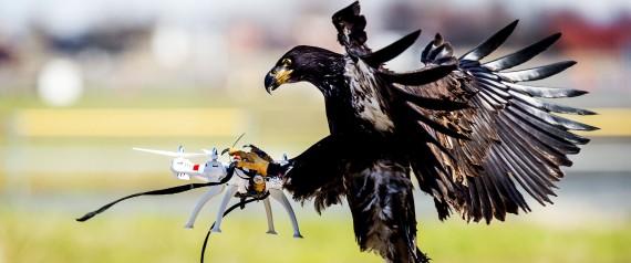 EAGLE DRONE