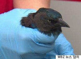 미국 주택가에 수십 마리의 새가 비처럼 내려 죽었는데 이유를 모른다