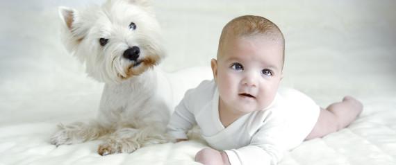PUPPIES BABIES