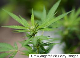 Tiny Alberta Town Might Host A Medical Marijuana Grow-Op