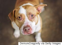 La leçon de courage de la SPCA