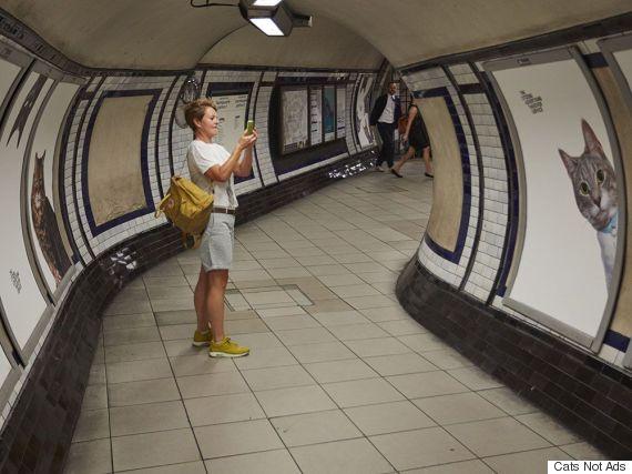 gatos metrô