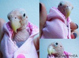 Esta es Rhea: el pájaro sin plumas que ha enamorado a las redes sociales