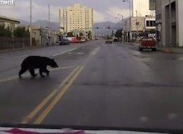 Cette patrouille de police fait une course poursuite... avec un ours