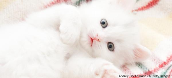 Accarezzare, coccolare e baciare i gatti è rischioso (soprattutto i cuccioli)