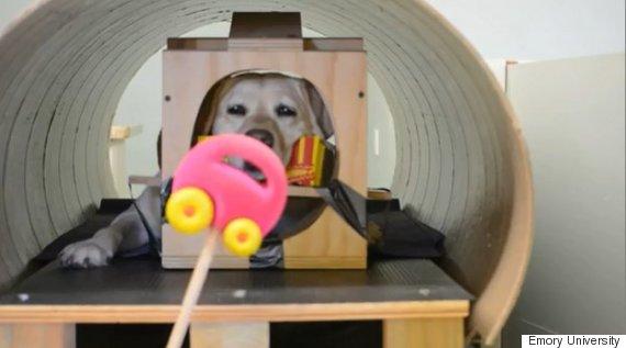 cachorro teste