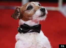 VIDEO: Uggie's Awards Nods