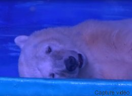 «L'ours le plus triste du monde» pourrait avoir une nouvelle maison