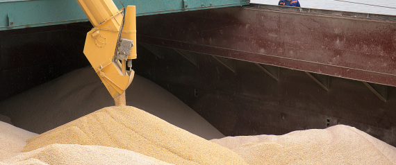 IMPORT WHEAT EGYPT