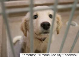 Alberta Humane Society Rescues 71 Dogs